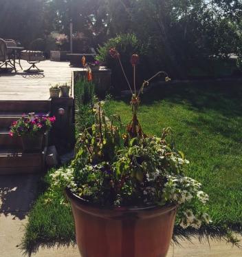 Annisa's garden.
